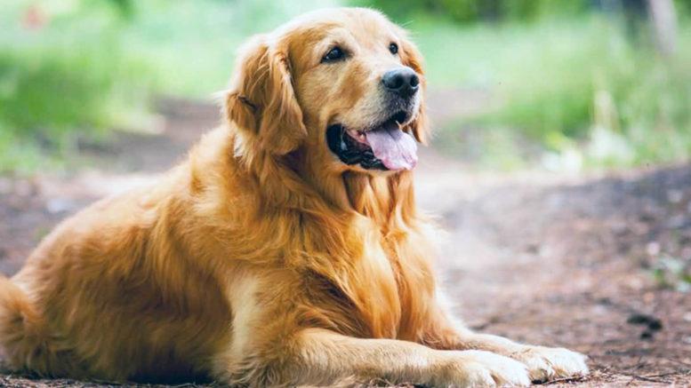 смысл жизни у собаки