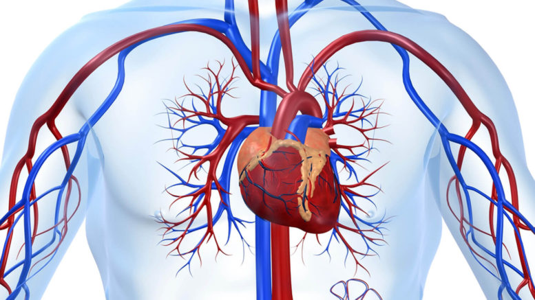 снизить риск развития сердечно-сосудистых заболеваний