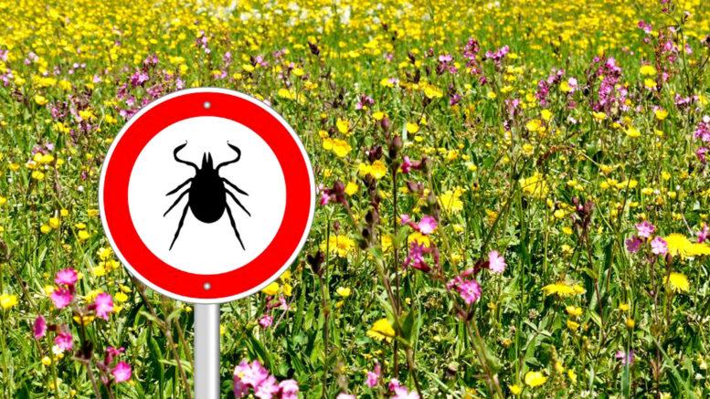 Клеищи и опасные болезни