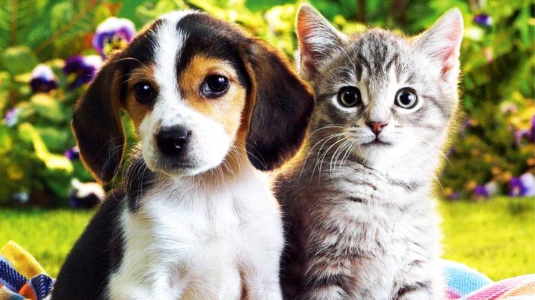 Отношение мужчин и женщин к животным